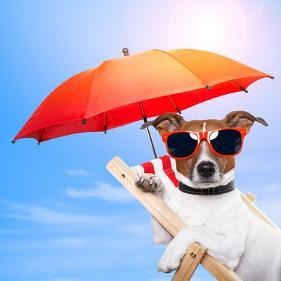 Dog Sunbathing On A Deck Chair Photographic Print Javier Brosch Art Com In 2021 Pet Hacks Pets Animal Icon
