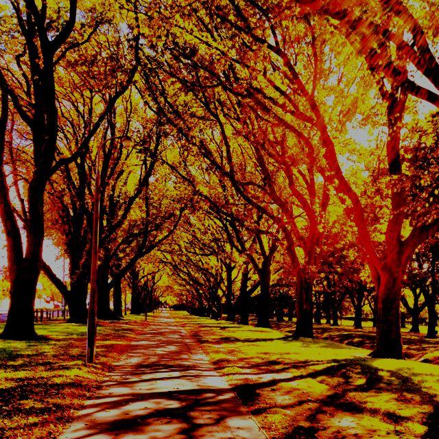 Running through Hagley Park in Christchurch, NZL
