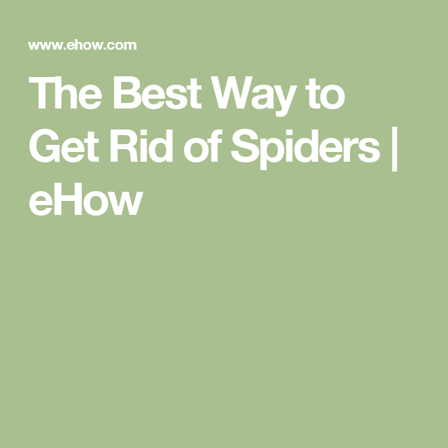 The Best Way to Get Rid of Spiders | eHow