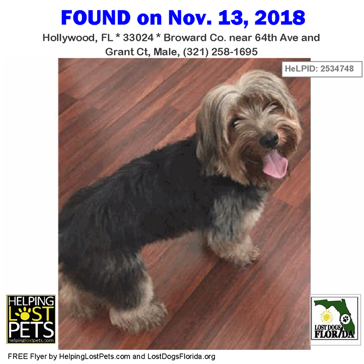 Found Dog Please Help Find This Found Dog S Family This Black