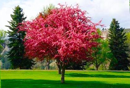 83c8ee38c12ce01bee323c6e56157ba9 - Top Ten Trees For Small Gardens