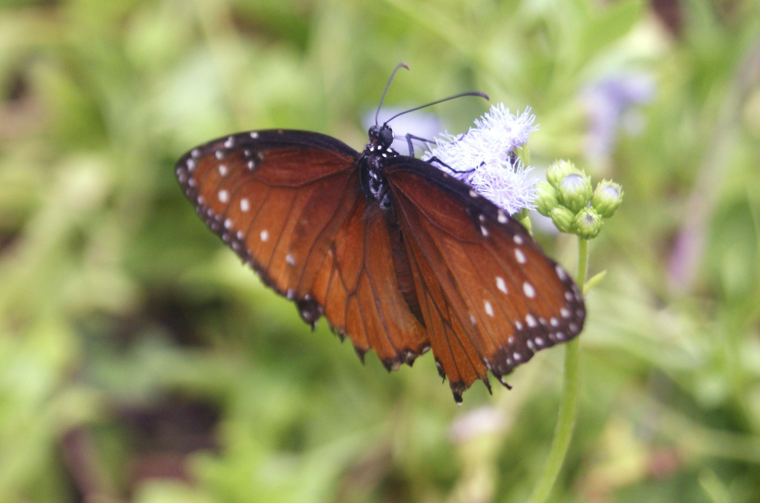 Mariposa en Cancún, México.