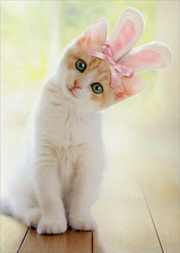 Details about Kitten With Bunny Ears Cat Easter Card - Greeting Card by Avanti Press