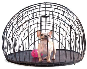Light Airy Traditional Home Dog Crate Dog Crates For Sale Stylish Dogs