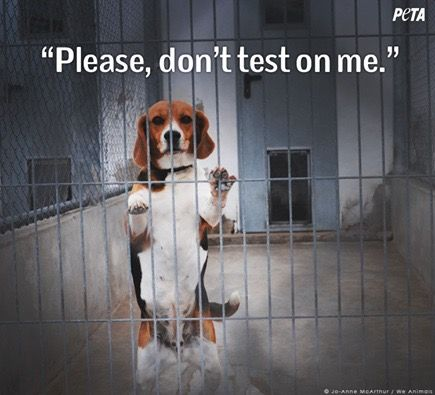 Pin By Defendanimals Defending Animals Online On Animal Testing