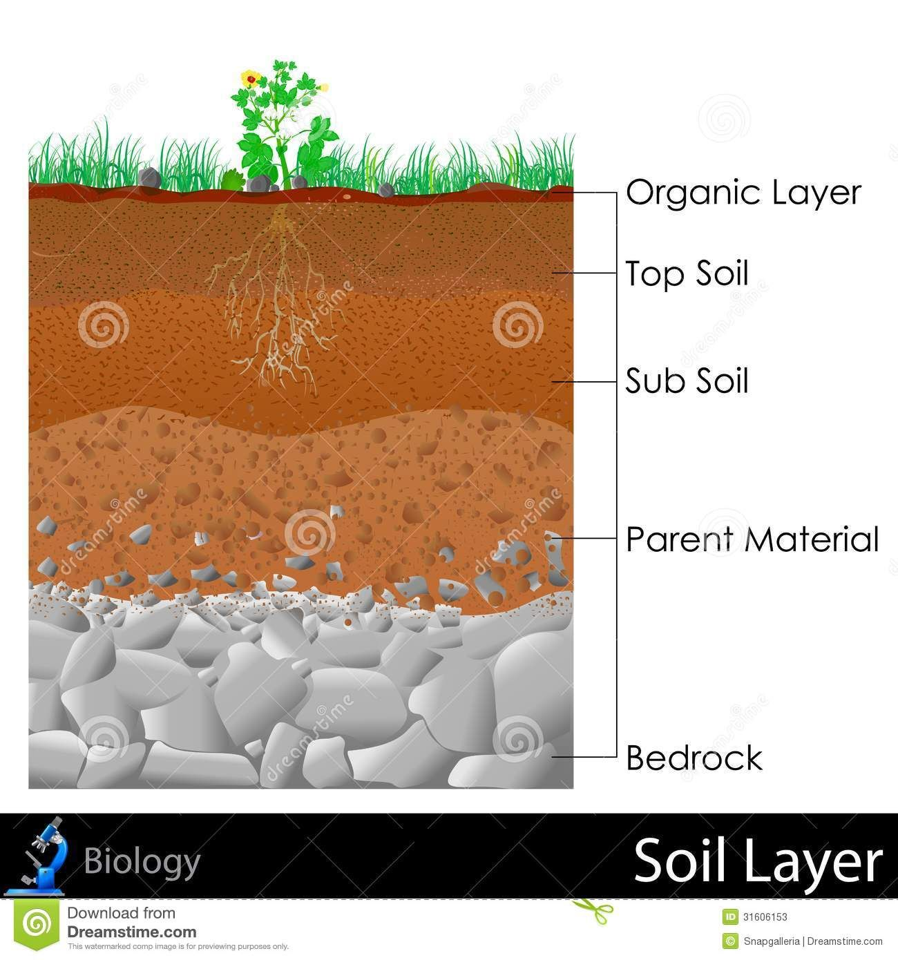 Layer Of Soil Stock Photos Image 31606153 Soil Layers Soil Science For Kids