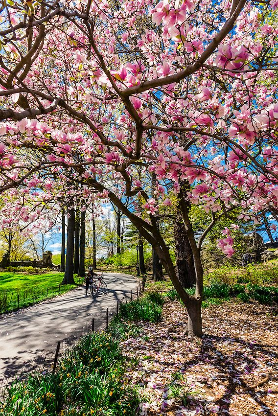 Central Park Nyc City Wallpaper Beautiful Landscapes Beautiful Nature