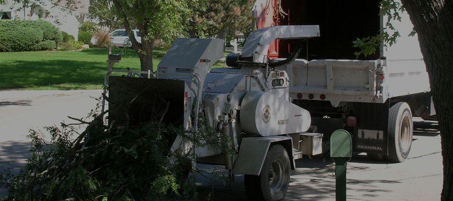 """ We are your local tree service, Arborist & Tree Surgeon"