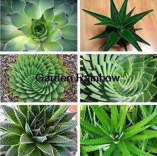 Resultado de imagen para plantas suculentas