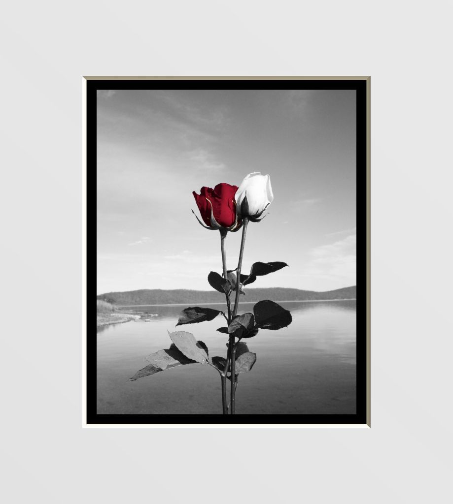 black, white u0026 red wall decor | Red Rose Wall Art