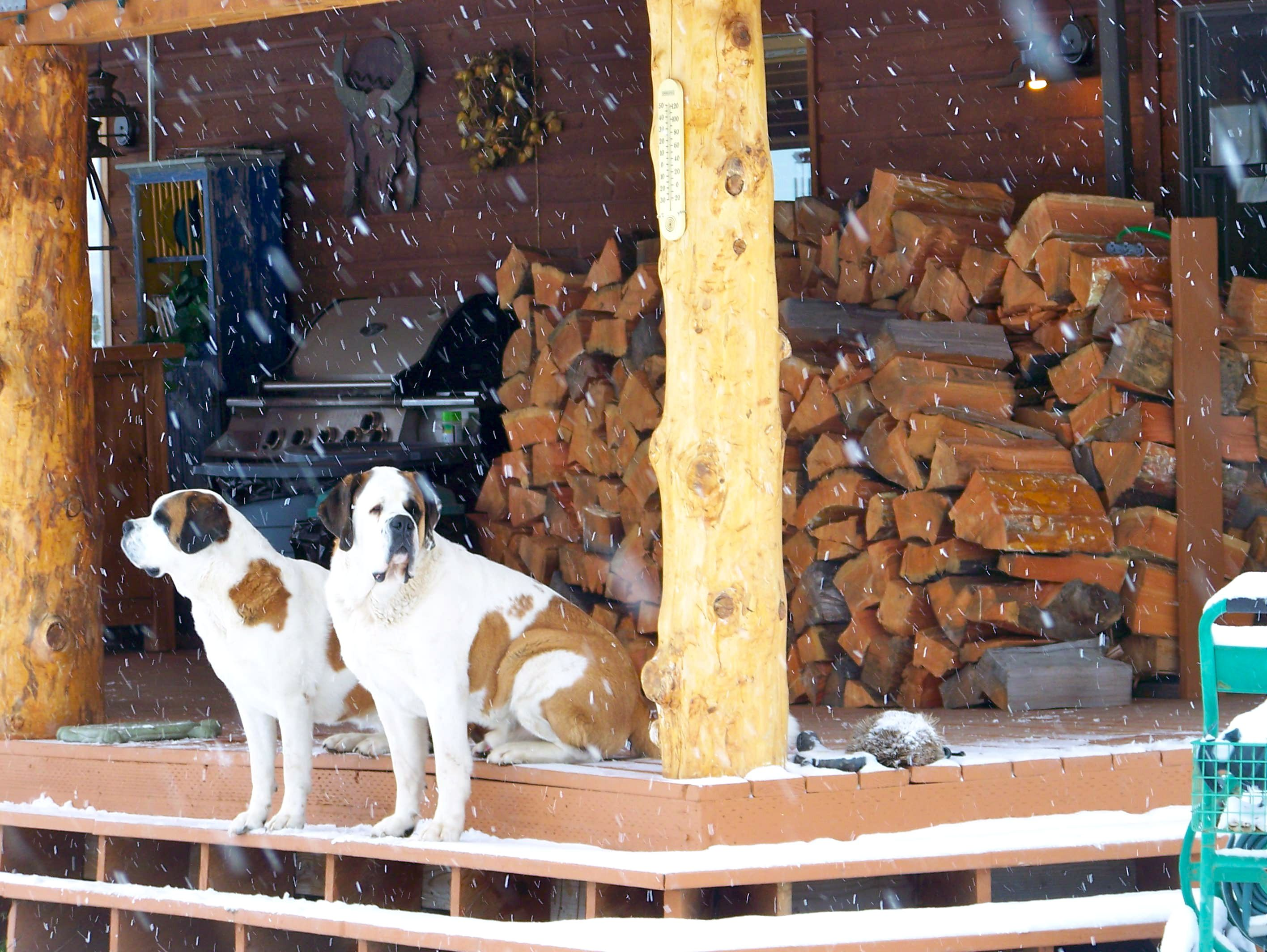 Welcoming Committee at Gaynor's Ranch Resort, Whitefish MT.