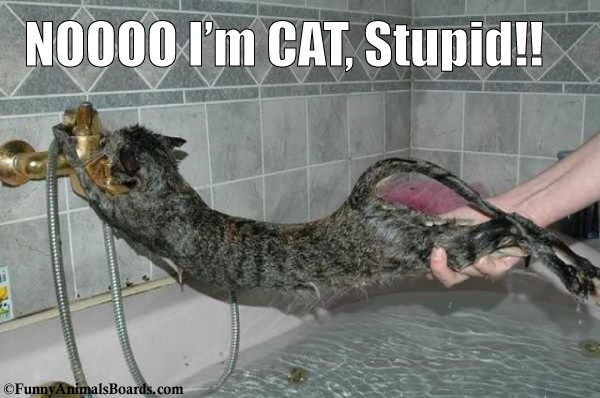 NOOOO I'm CAT, Stupid!! Bath-time is not fun for a cat. Shampooing a cat destroys the natural balance of oils in their fur. The only time I shampoo a cat now is if they are covered in a flammable or toxic liquid. Cattitude