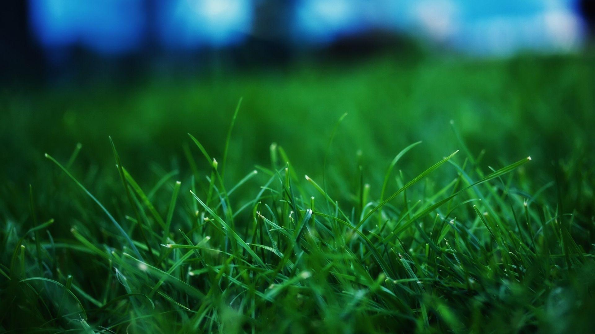 Grass Summer Lawn Http Www Wallpapers4u Org Grass Summer Lawn Best Nature Wallpapers Grass Wallpaper Nature Wallpaper