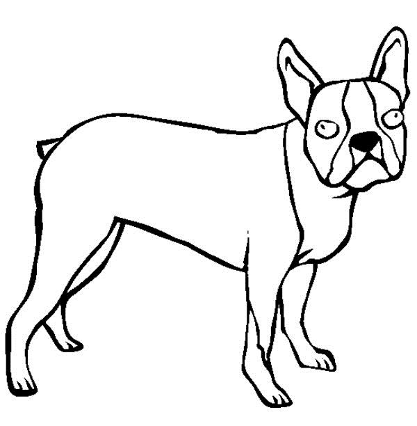 Boston Terrier Puppy Coloring Pages Jpg 600 612 Pixels Puppy Coloring Pages Boston Terrier Boston Terrier Puppy
