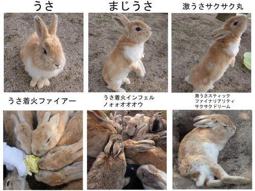 ねたたま ウサギで 激おこぷんぷん丸 を表現 なにこれ可愛い ライブドアブログ ウサギ 動物 かわいい 動物