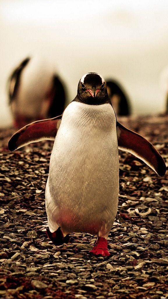 Картинки пингвина прикольные
