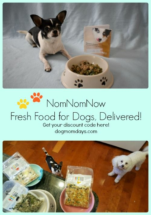 Taste Testing Nomnomnow Discount Code Dog Nutrition