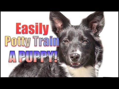 5 Powerful Dog Training Videos Free Online Dog Therapy Dog