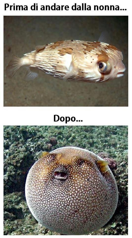 Foto Divertente: Pesci prima e dopo mangiato