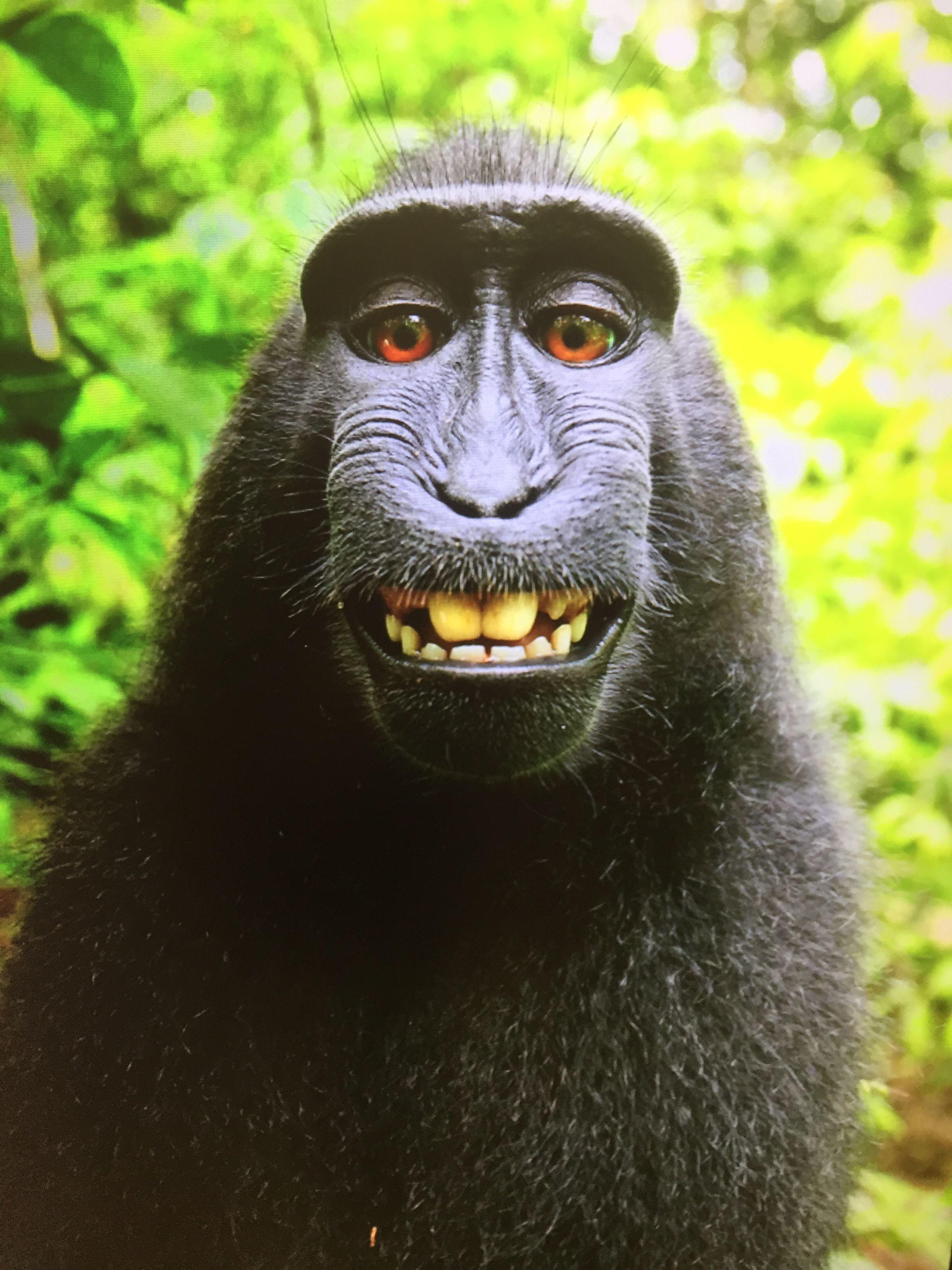 First Animal Selfie! Saatchi Gallery Selfie Exhibition