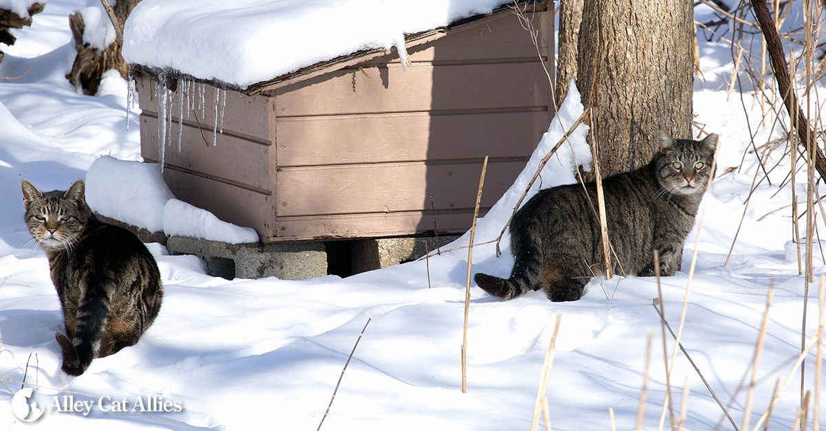 Community cats can thrive outside even winter weather—but