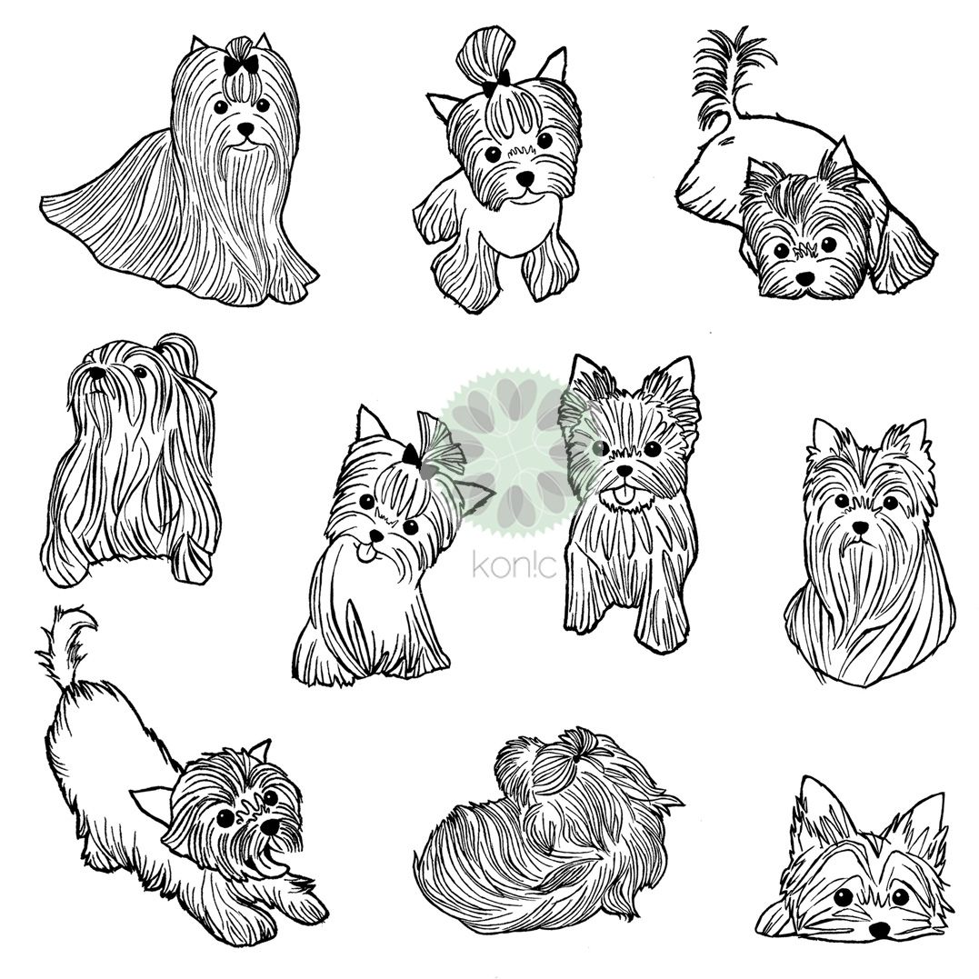 Coloring pictures yorkies - Yorkies York Yorkie Yorkshire Terrier Terriers Illustrations For Konic Pl