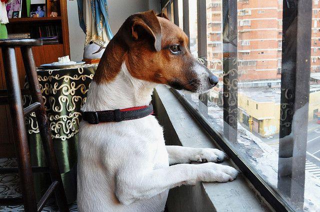 Waiting le chien de sandra. trop mignon! il attend qui? hum? sandra? surement. trop mignon!