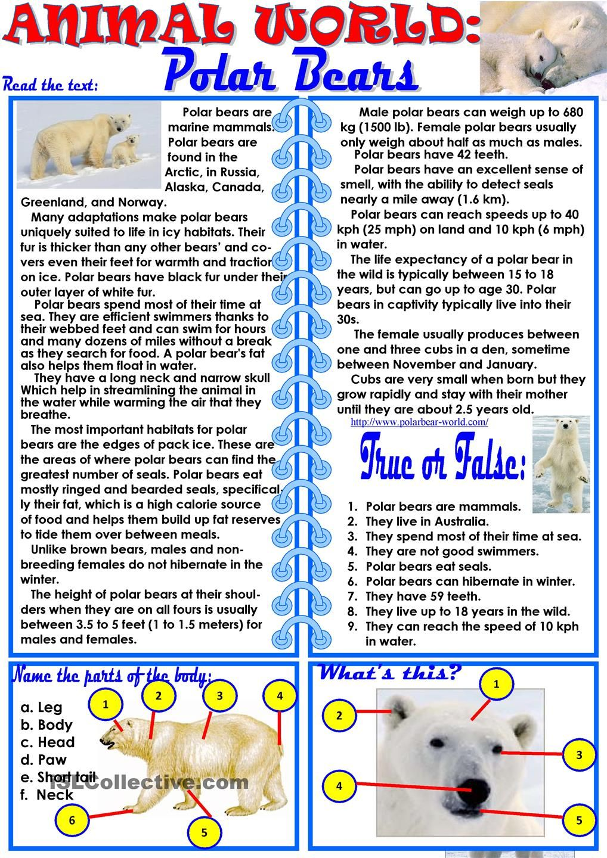 medium resolution of Animal World: Polar Bears   Summer school reading