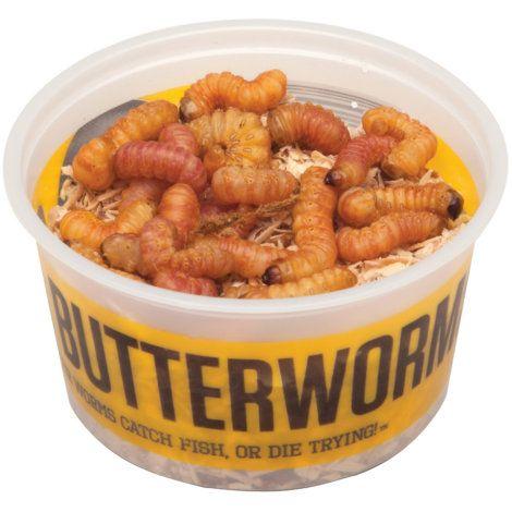 Butterworms Bait - 20 Ct   Hunting & Fishing   Bait, Dog