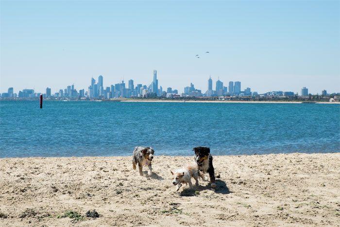 Brighton Dog Beach