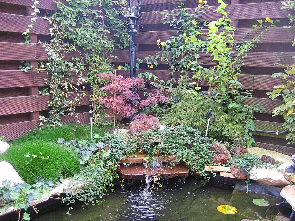 Kleine vijver leuke tuin met ronde vormen en muurtjes en for Tuin en vijver