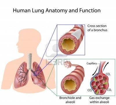 What is Lung Cancer? What Causes Lung Cancer? | The Lungs & Brains ...