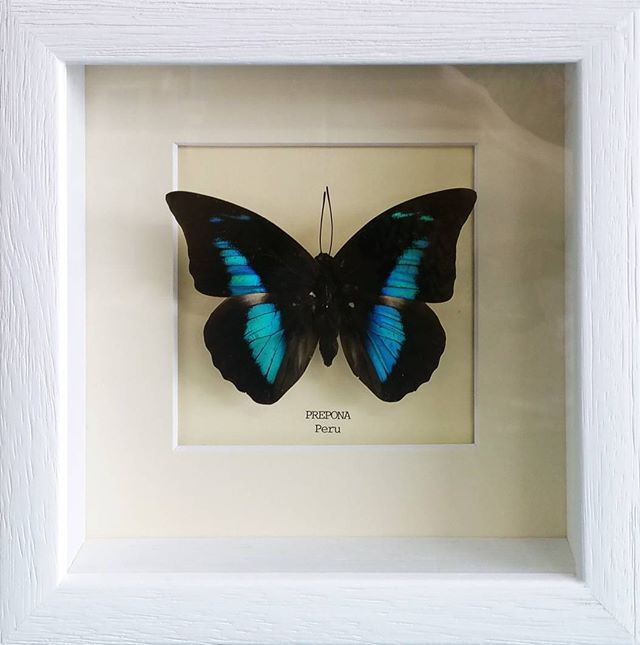 For all your framing needs visit us in Kettering or Kempston today ...
