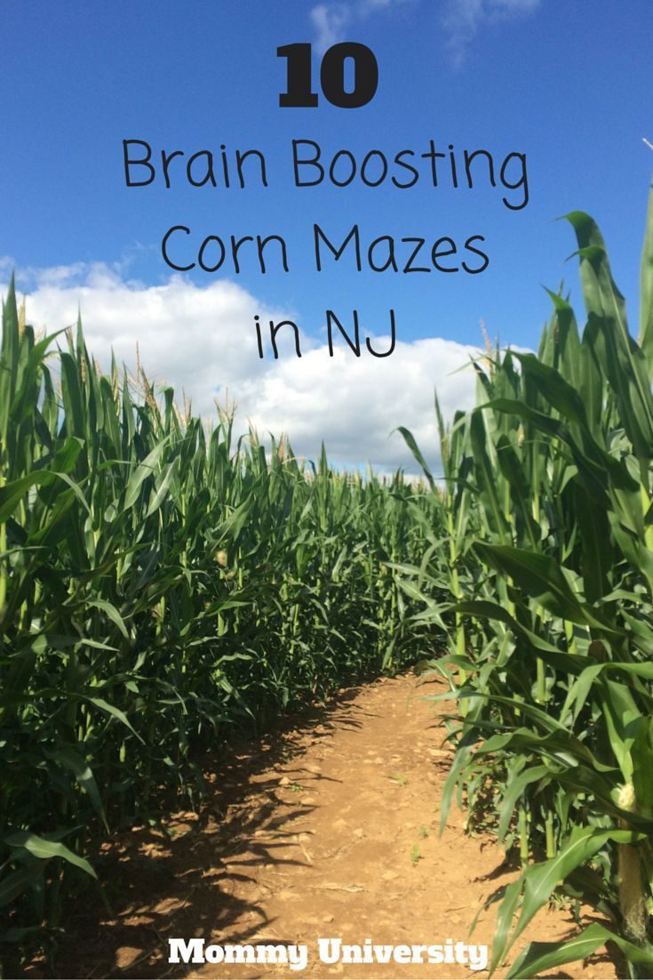 10 Brain Boosting Corn Mazes In New Jersey Compiled By Mommy