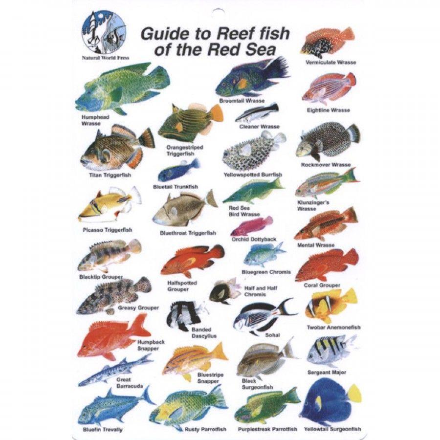 Red Sea Max 130D User Manual