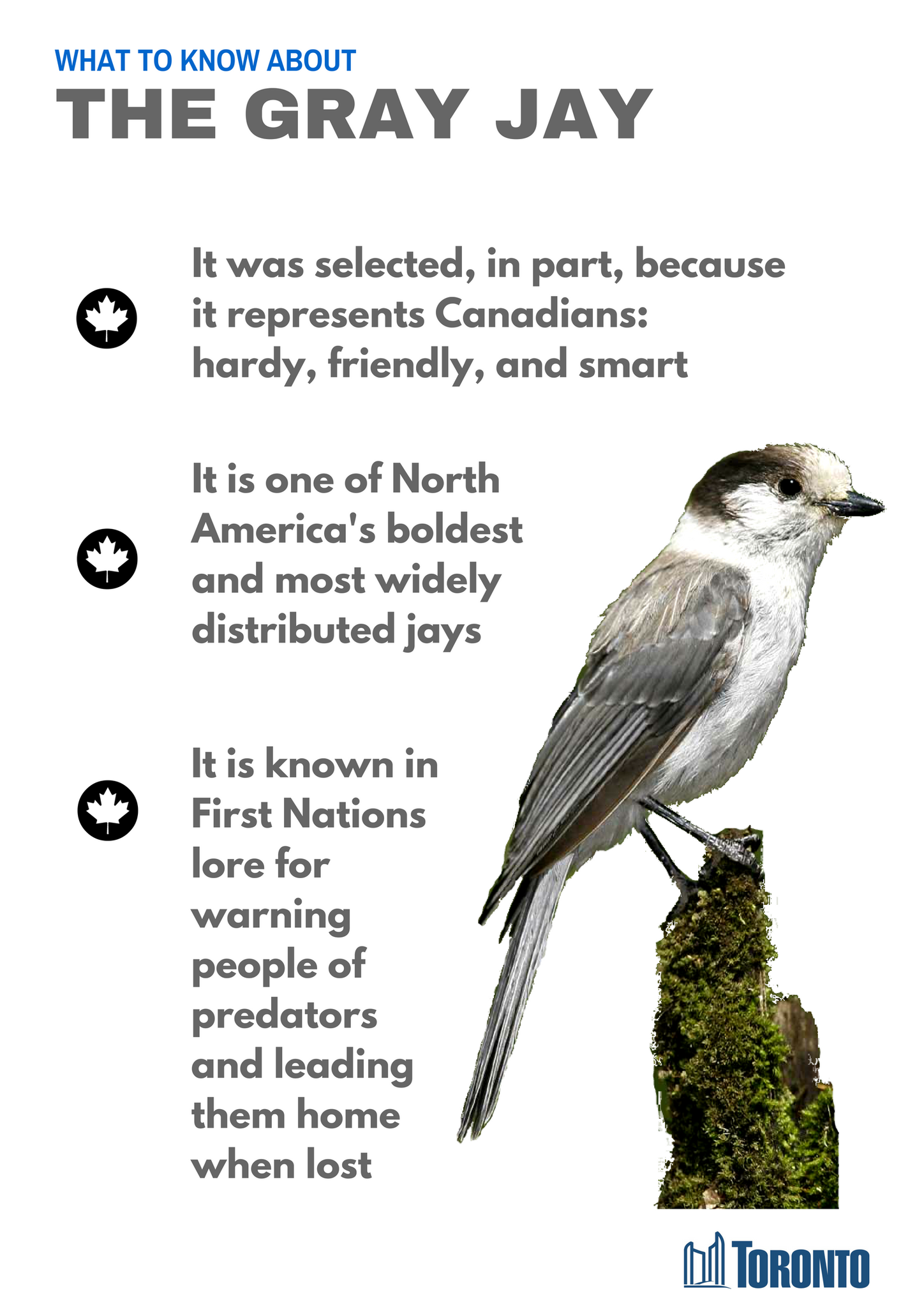 canada u0027s official bird grey jay also called canada jay or