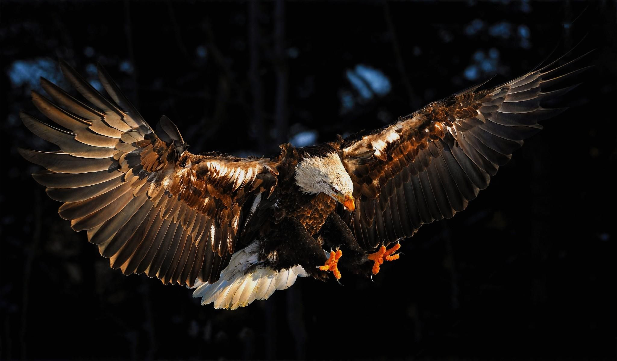 Eagle Wallpapers, Download Eagle HD Wallpapers for Free ...