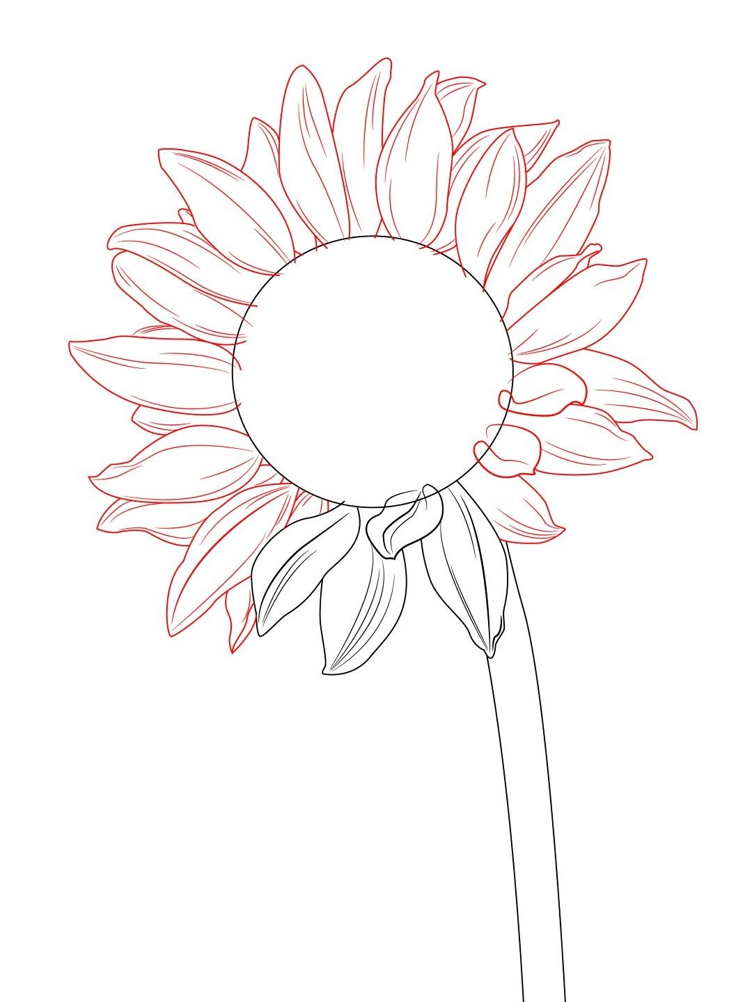 How To Draw A Sunflower | Art | Sunflower drawing ...