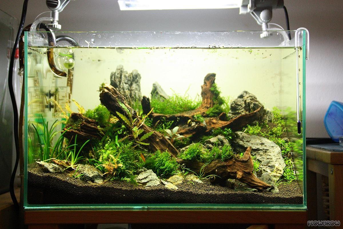 planted tank aquascape aquascaping planted tanks aquariums pinterest nano aquarium. Black Bedroom Furniture Sets. Home Design Ideas