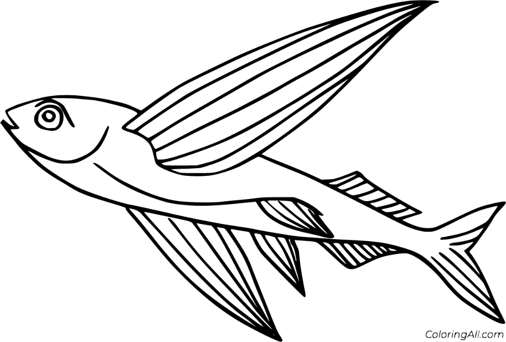 8 Free Printable Flying Fish Coloring Pages In Vector Format Easy To Print From Any Device And Automatically Fit Any Pa Fish Coloring Page Coloring Pages Fish