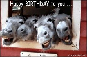 Donkey Animals Happy Birthday Quotes Funny For Just