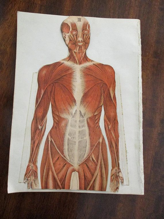 1800s antique man overlay color lithograph MEDICAL CHARTS - antique