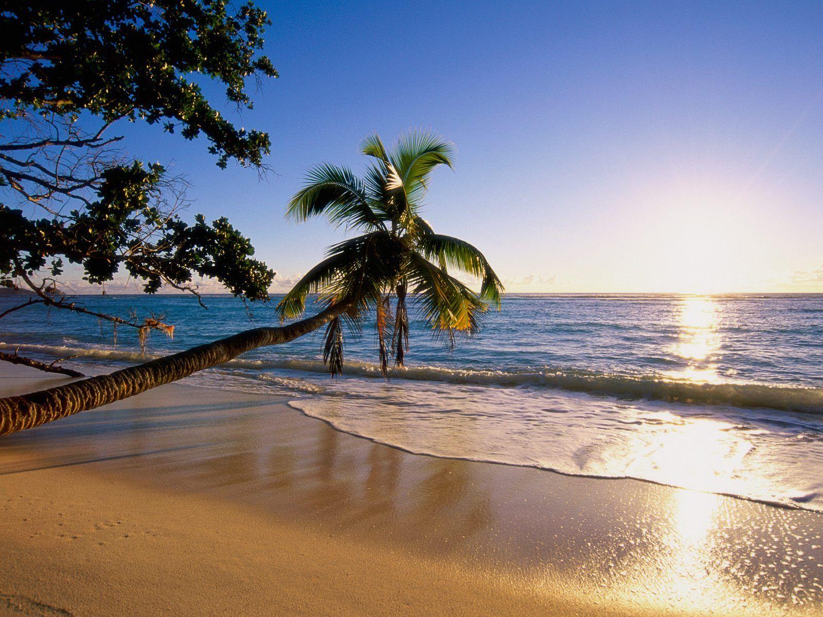 Island Scenery Tropical Beach Sun At Water Wallaper
