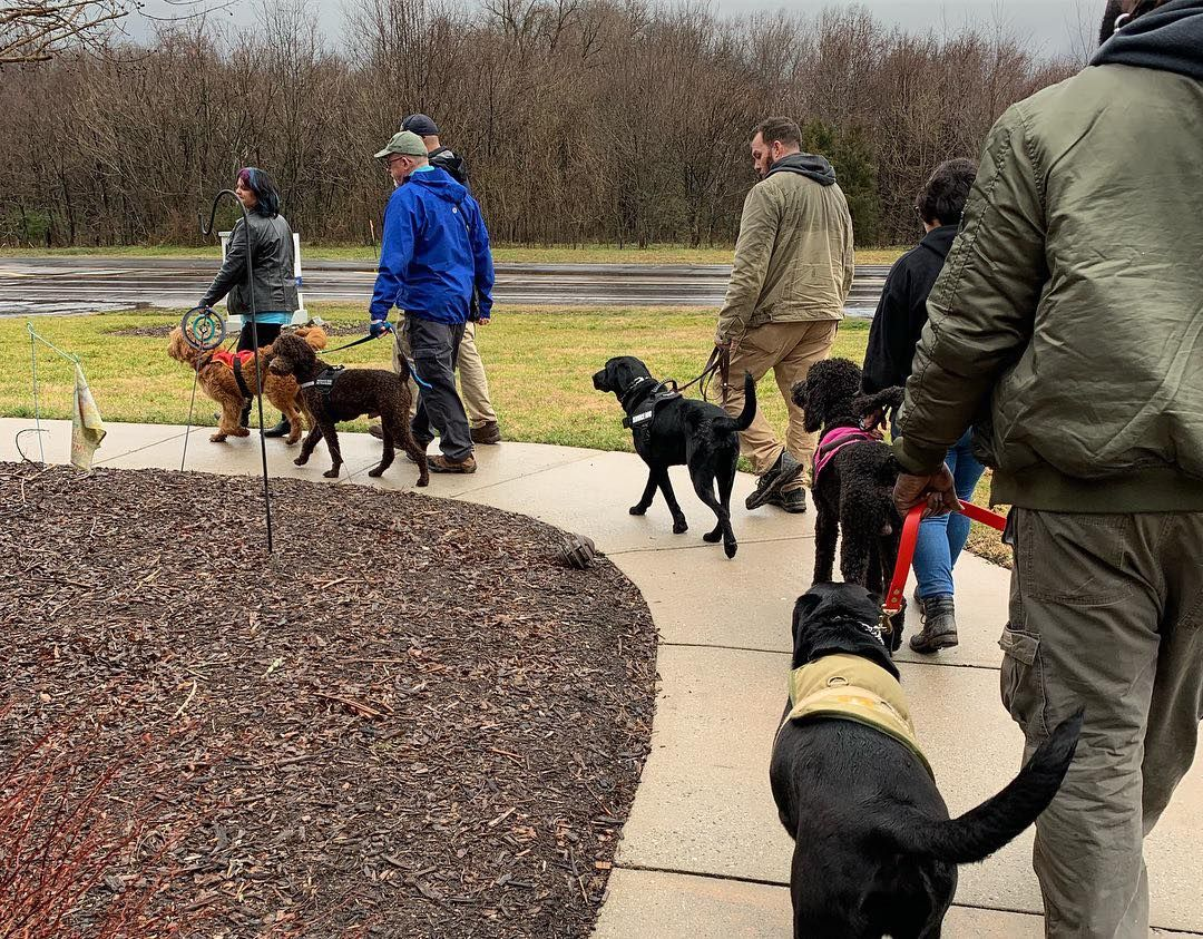 Students Are Out Learning To Work Service Dogs In Public