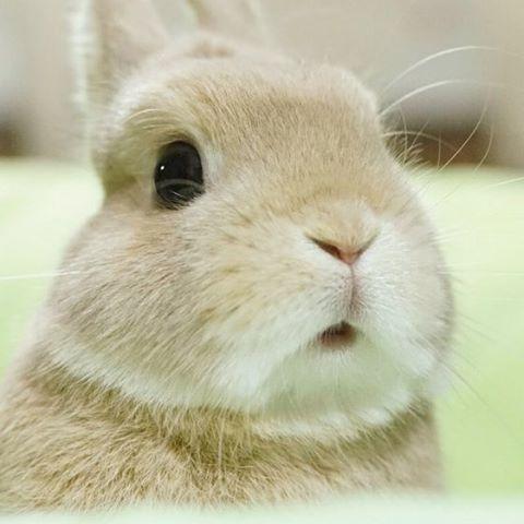 Cuteness Overload Cute Baby Animals Cute Baby Bunnies Animals Beautiful