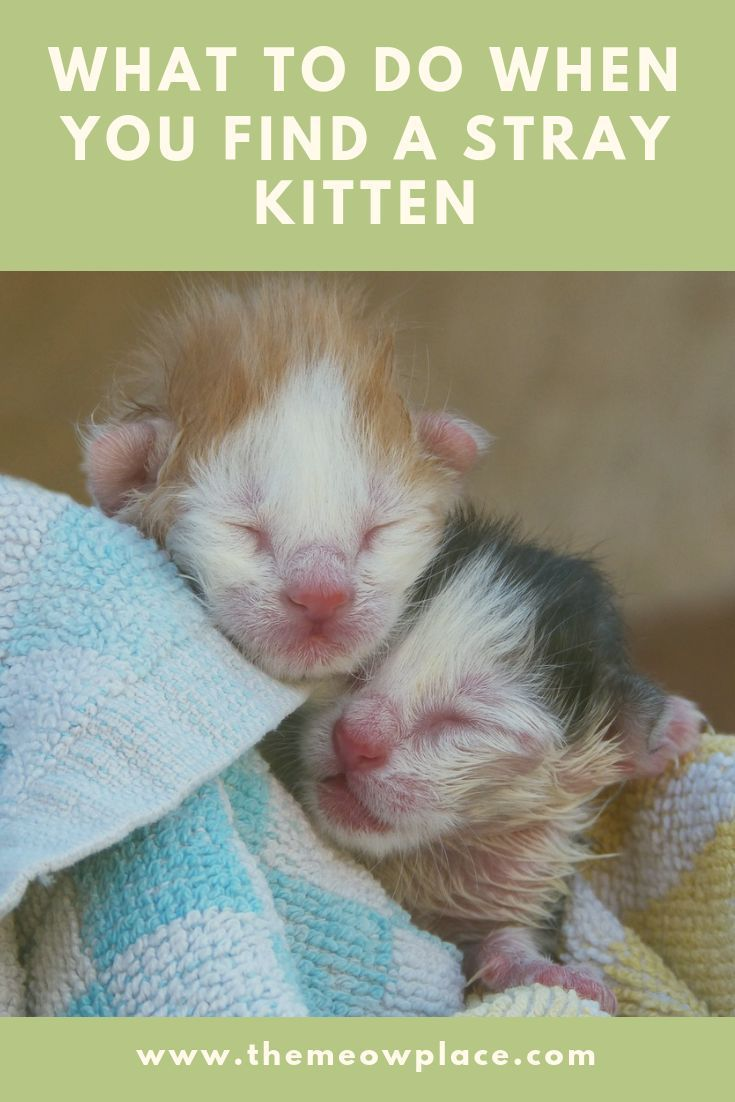 What To Do When You Find A Stray Kitten