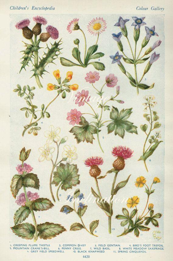 Vintage Antique 1920 Flowers Botanical Bookplate Original