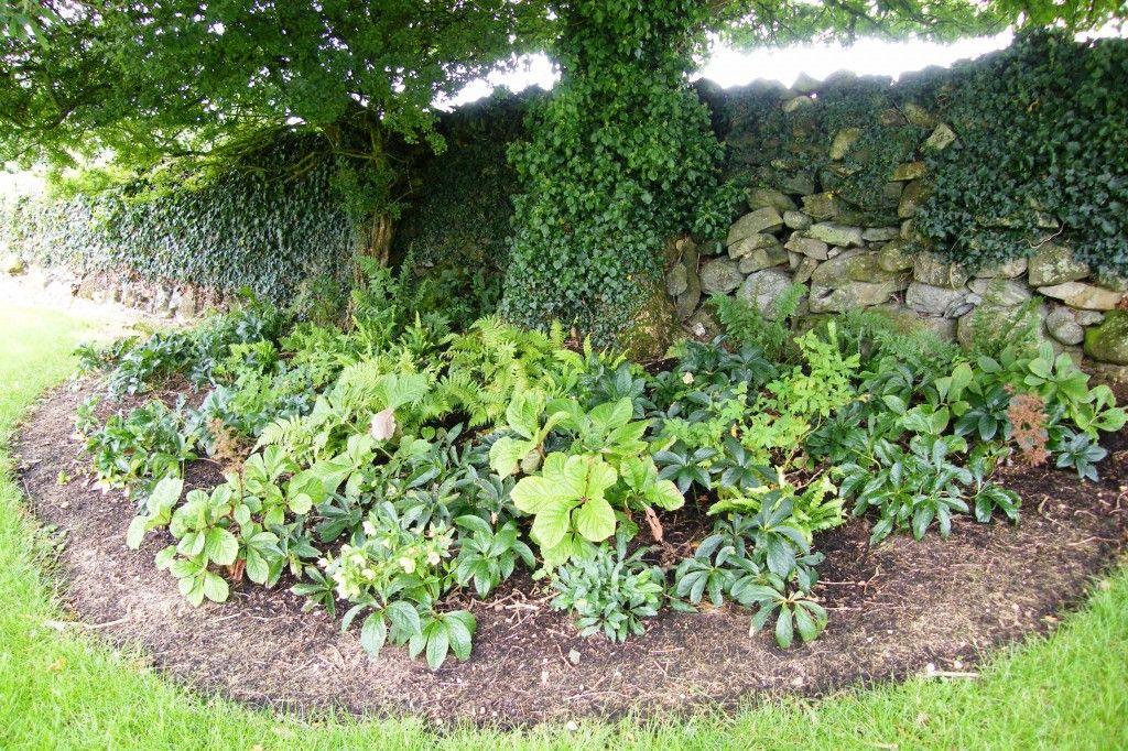 Perennial Shade Garden | For A Shade Garden, Perennial Flowers Under A Tree,  Partial