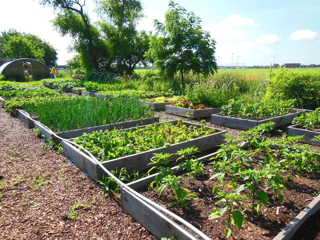 oswego food pantry community garden