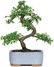 How To Look After A Jade Plant Jade Plants Plants Plant Cuttings